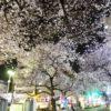板橋駅前 東口の桜パワーを見よ!